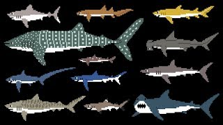 Sharks (8-Bit) - Learn Animals - Great White Shark - The Kids' Picture Show (Fun & Educational)