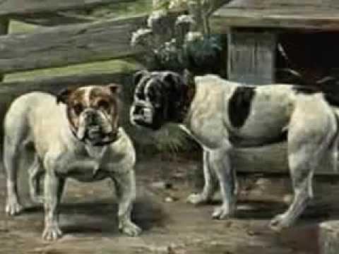 difference between olde english bulldogge vs english bulldog