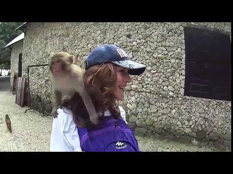 05 Путешествия Вани и Пати  Остров обезьян