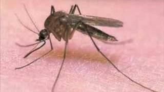 (1.86 MB) Piosenka o komarze xD Mp3