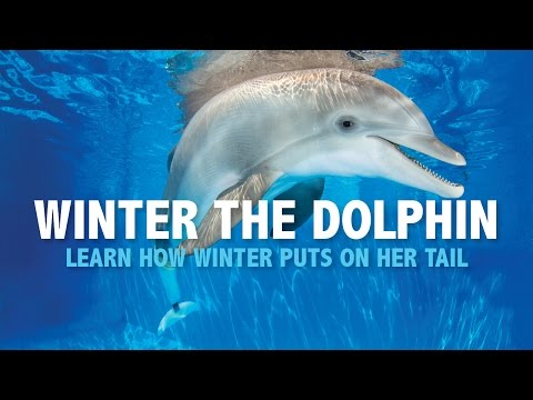 How Winter the Dolphin Got Her Groove Back