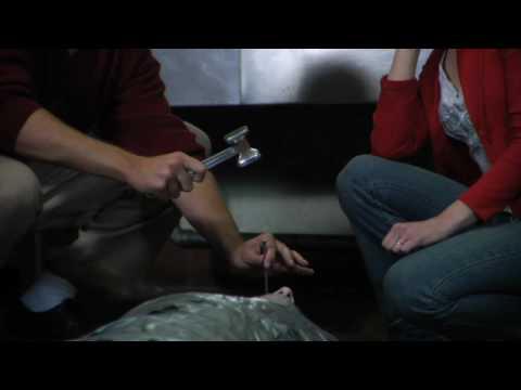 Watch Die-ner (Get It?) (2009) Online Free Putlocker
