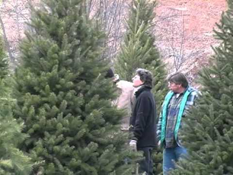 Kohls Stony Hill Tree Farm Near Milton PA.wmv