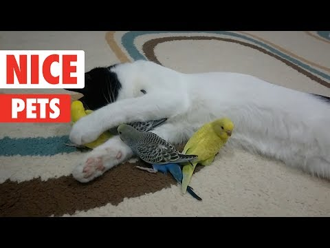 Nice Pets | Funny Pet Video Compilation 2017