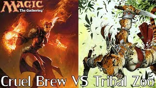 MtG Modern Gameplay - Tribal Zoo VS Cruel Brew