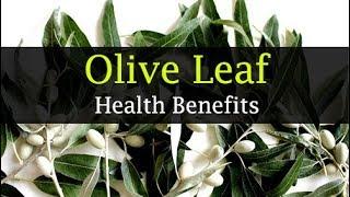 10 Health Benefits of Olive Leaf