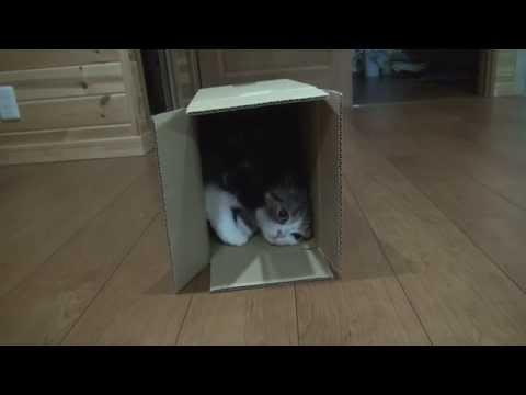 いろいろな箱とねこ5。-Many boxes and Maru 5.-