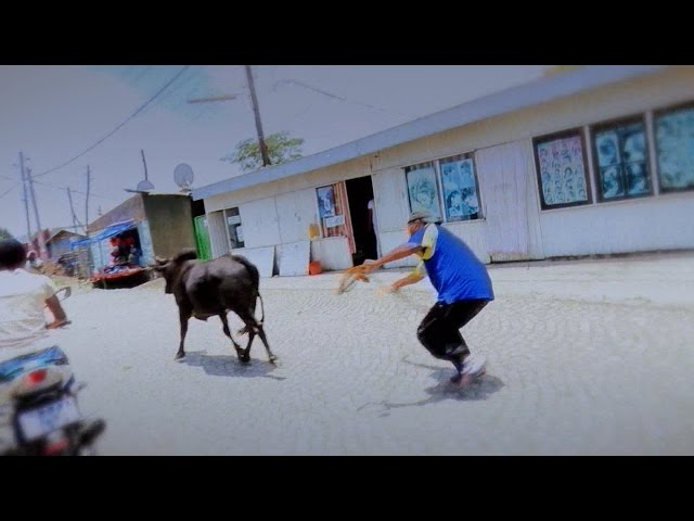 EBS Fasika Especial Show: Yekeraw Cow Boy ( Figa Telafewoch)