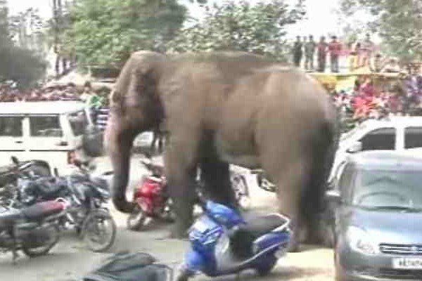 Wild elephant damages around 100 houses in West Bengal's Siliguri