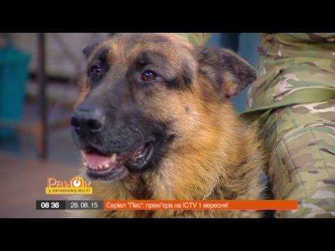 Продюсер сериала «Пес»: У звездной собаки есть свой райдер