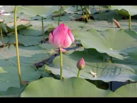 Tôn Giả Tu Bồ Đề (Giải Không Đệ Nhất) - Karaoke (Nhạc Phật Giáo chế lời)