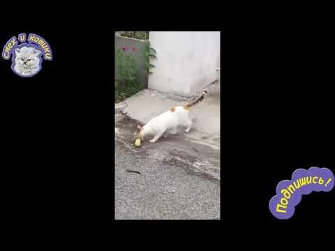 Кот Пытается Пройти Через Забор С Кукурузой  РЖАЧ !!!