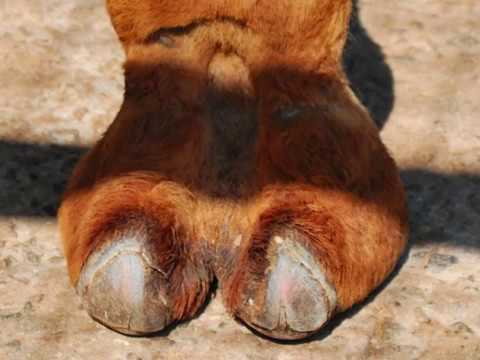 **EXPLICIT** BEST CAMEL TOE PICS EVER thumbnail