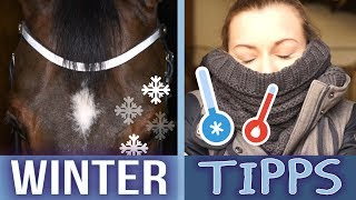 STALLTIPPS - WINTER EDITION! | BinieBo