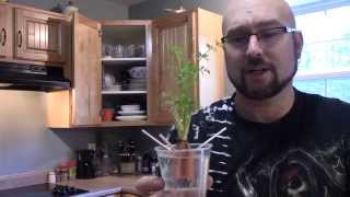 HOW TO REGROW CARROTS,LETUCE,LEEKS,GREEN ONIONS FOLLOW UP !