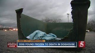 Dog Abandoned, Froze To Death In Doghouse