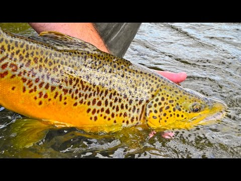 Fly Fishing Bighorn River Montana | Spring Fishing on the Bighorn River in March