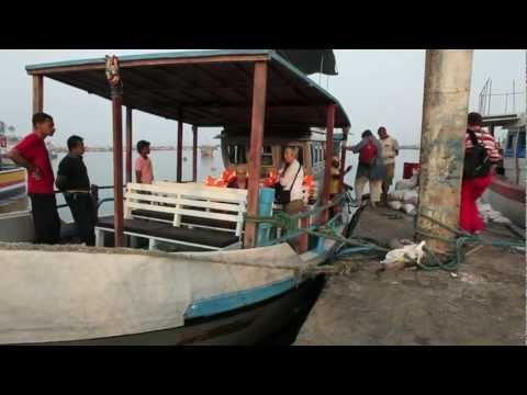 Blue Whales Off The Coast Of Mirissa, Sri Lanka video