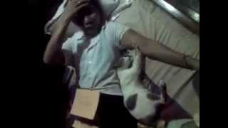 cat  massage human video is very funny in Cambodia
