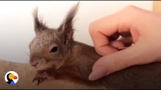 Squirrel Attacked As Baby Finds PERFECT Mom | The Dodo