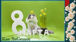 Смешное видео с котами приколы с котами - ПОЗДРАВЛЕНИЕ С 8 МАРТА ОТ МИЛЫХ КОТИКОВ