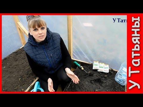 Сеем семена огурцов в теплицу безрассадным способом. Секреты выращивания большого урожая ОГУРЦОВ!