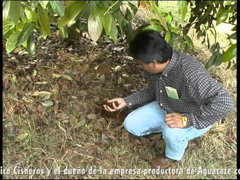 Cultivo de Aguacate - PART I - BIOMA - GEOLIFE SYSTEM - CARPOS
