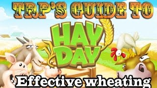 ♚Hay Day Strategies & Tips➜Wheating?! (New Effective Way!)