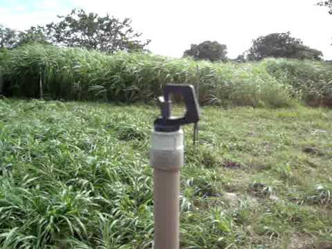 Como fazer irrigação de pastagens