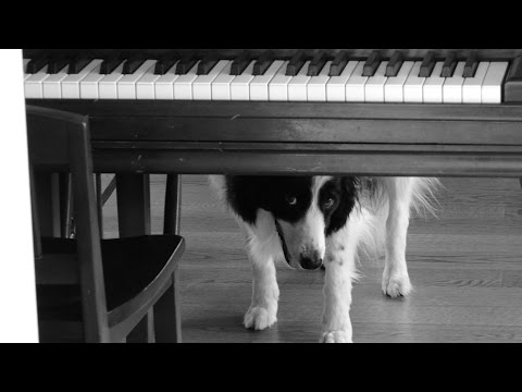 Bizarre Things My Border Collie Loves