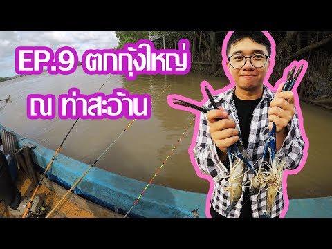 ตกกุ้งกัน Ep.9 ตกกุ้งใหญ่ ที่ท่าสะอ้าน กับไต๋รอ (The Giant Prawn Fishing In Bangpakong)