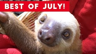 Funniest Pet Reactions & Bloopers of July 2017 | Funny Pet Videos