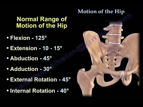 Hip anatomy video