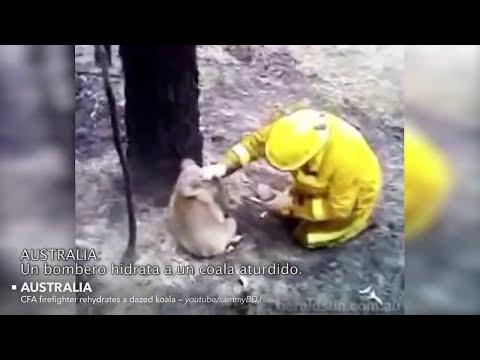 Increibles rescates de animales - recopilacion