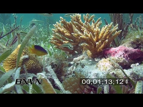 6/20/2007 Prolifera Reef lock shots stock footage