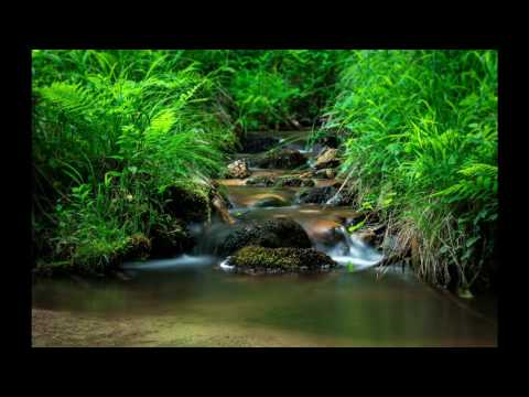 Relaxation Music for Sleeping Insomniac , Meditation | Nature Sound | River Flowing & Birds