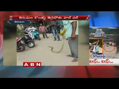 9 foot Snake Hulchul on Tirumala Hills | Tirupathi
