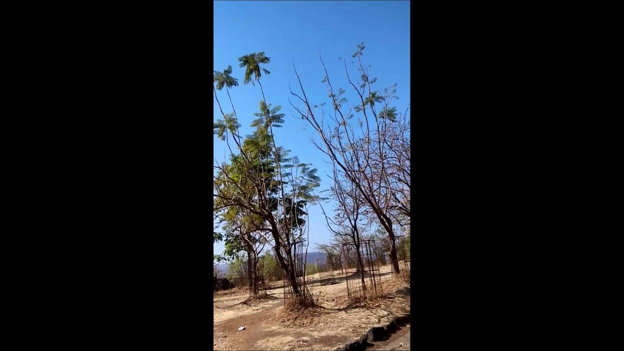 Bird humming Sajjangad Ramdas Navmi utsav 2015 - YouTube