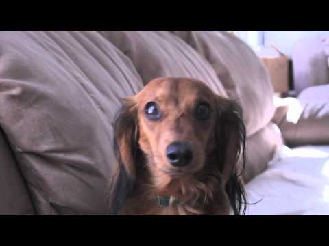 Marley And Me video