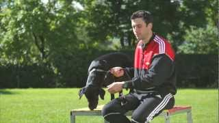 ALIAS-EQTEL © AGILITY & OBEDIENCE _IT