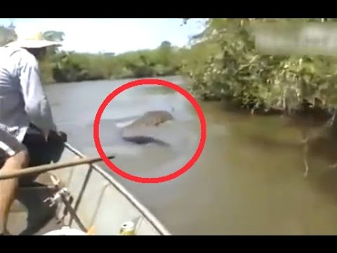 15 Amazon River Monsters