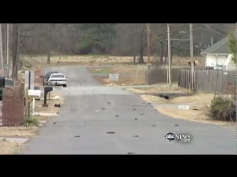 Dead Blackbirds Fall  Again in Arkansas 2012