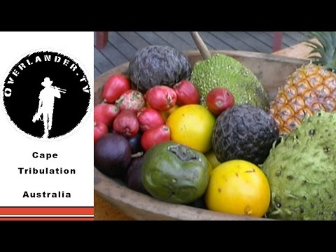 Cape Tribulation, Off the Grid Food Forest, Australia HD