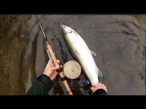 Lake Erie Fall Steelhead / Trout Fishing Center Pin, nice fresh chrome.