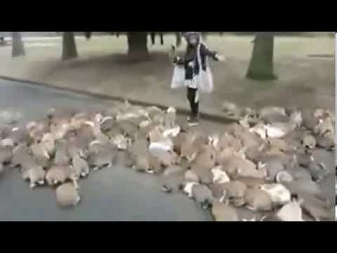 The Attack Of The Bunnies - BUNNY INVASION!