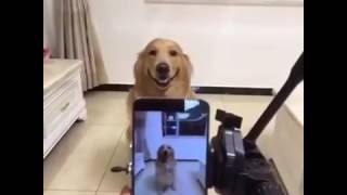 VIDEO FREEBOOTATO DI UN CANE CHE SORRIDE
