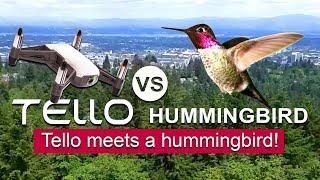 Tello VS Hummingbird - Filming a Hummingbird with the Tello Drone! - TOO COOL!