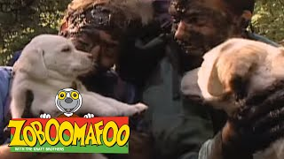 Zoboomafoo 113 - Puppies (Full Episode)