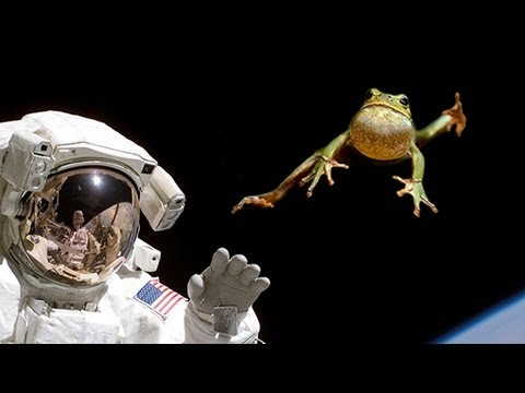 ZERO GRAVITY FROGS IN SPACE