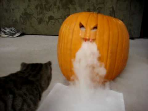 Another Dry Ice Pumpkin With Cat Youtube